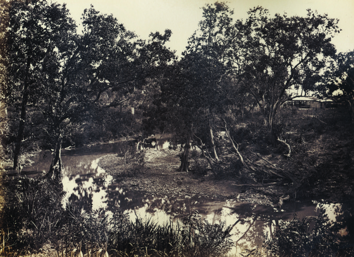 View on the McKinlay River, November 1879